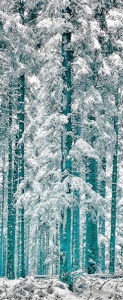 Black-Forest-Germany-•-photo-M-Barimisa-Photography-wallpaper-wp5005295