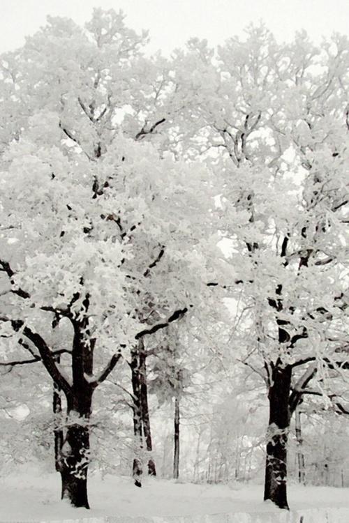 Black-and-White-Beautiful-wallpaper-wp5005279