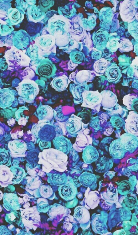 Blue-Roses-Picture-Floral-wallpaper-wp424172