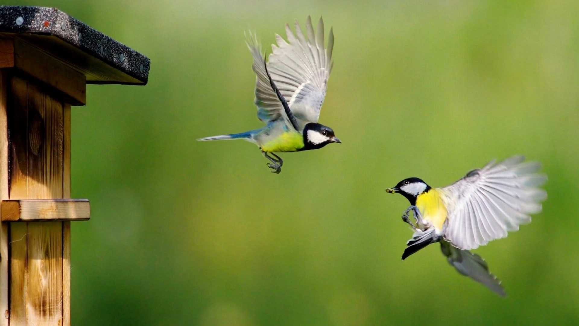 Bluetit-Cute-Birds-for-desktop-and-mobile-in-high-resolution-Hd-1920x1080-Need-wallpaper-wp3603558