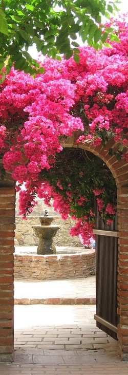 Bougainvillea-wallpaper-wp4405295