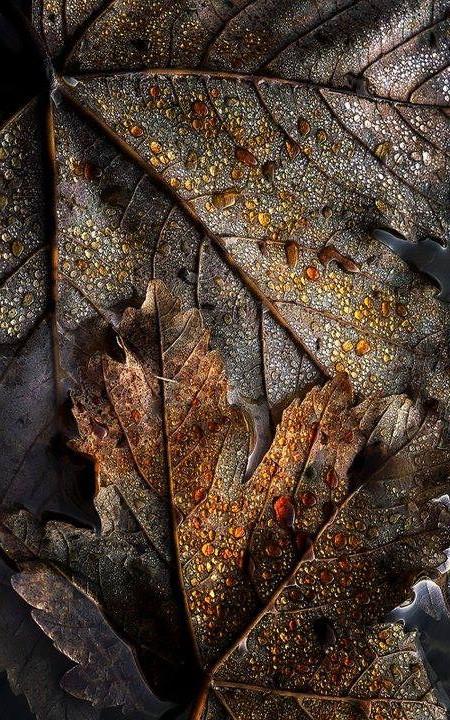 Brown-Buraun-Braun-Marrone-Brun-Marrón-Bruin-Colour-Texture-Pattern-Styl-wallpaper-wp5804226-1