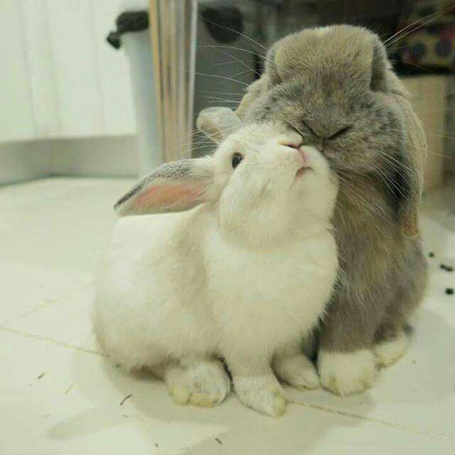 Bunnies-are-so-capable-of-love-and-affection-if-only-people-just-took-the-time-to-understand-their-wallpaper-wp4804935