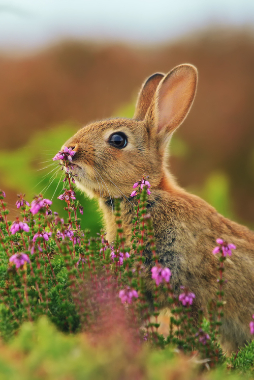 Bunny-Sniffing-Flowers-Cute-animal-picture-wallpaper-wp4405416