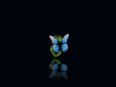 Butterfly-For-All-Phone-Types-Free-HD-Wal-wallpaper-wp4401858