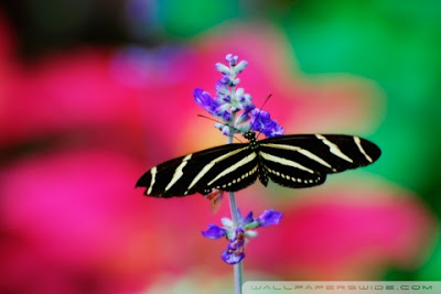 Butterfly-For-All-Phone-Types-Free-HD-Wal-wallpaper-wp4402078