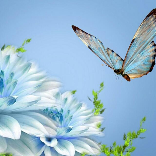 Butterfly-wallpaper-wp5804303