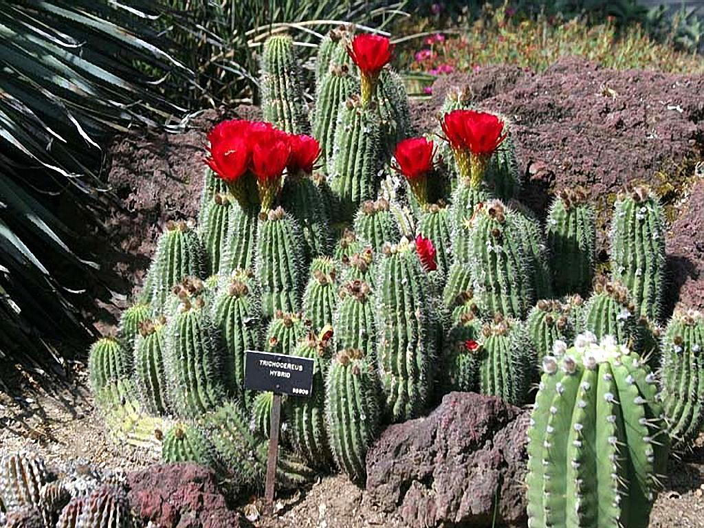 Cactus-Free-Desktop-Cool-×1080-Cactus-Pictures-wallpaper-wp3603825