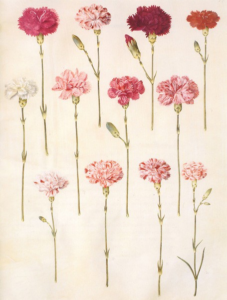 Carnations-are-cheap-per-stem-come-in-deep-colors-and-can-be-bunched-for-impact-L-wallpaper-wp5403972