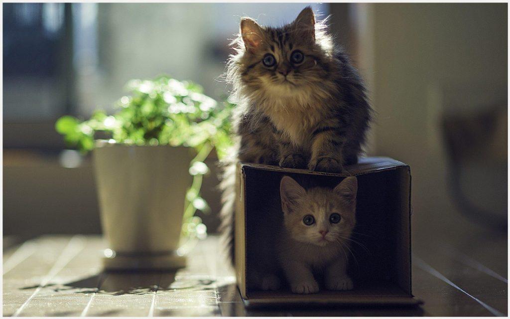 Cat-And-Kitten-Friendship-cat-and-kitten-friendship-1080p-cat-and-kitten-frie-wallpaper-wp3403770