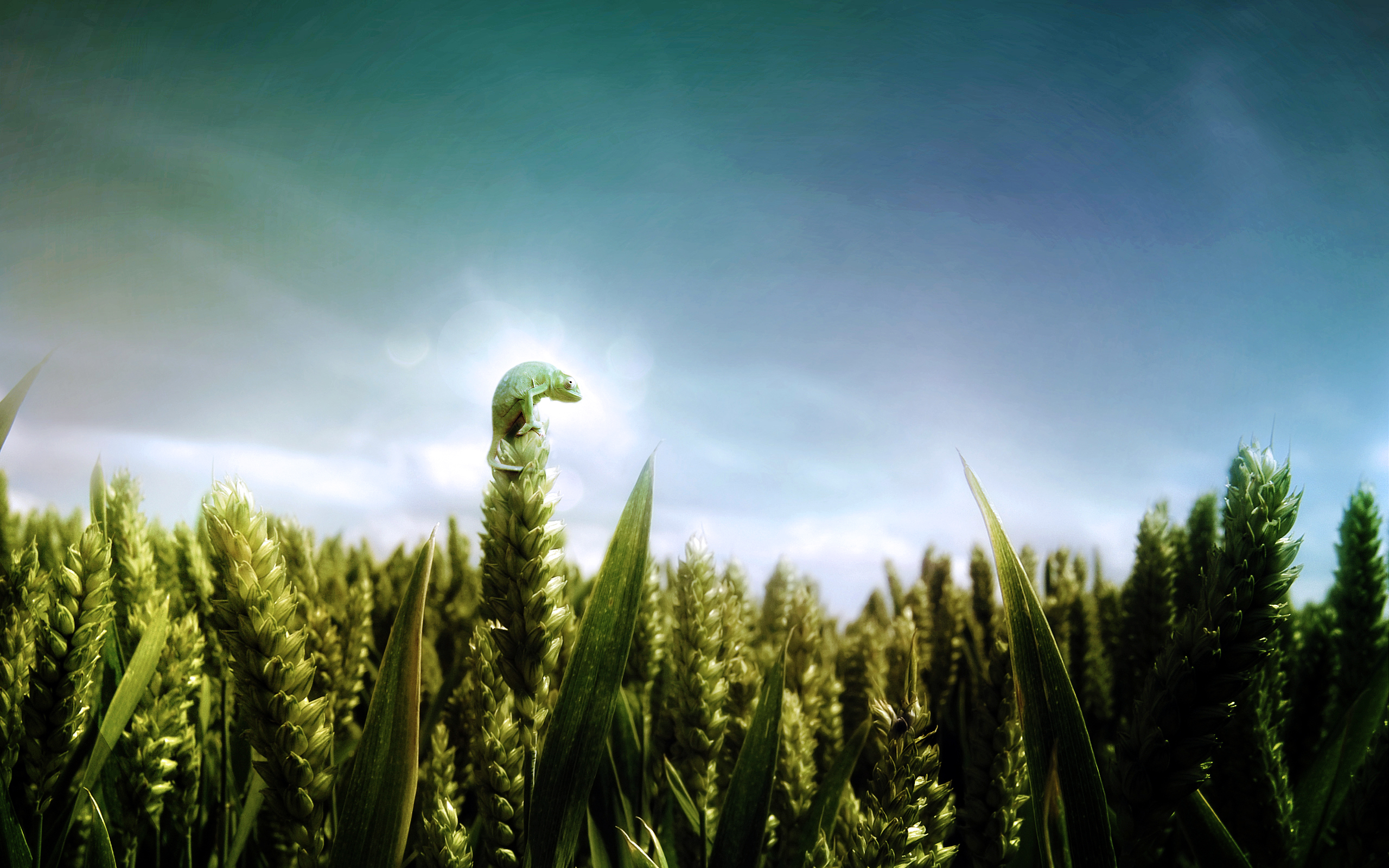 Chameleons-Fields-Skyscapes-wallpaper-wp424435-1