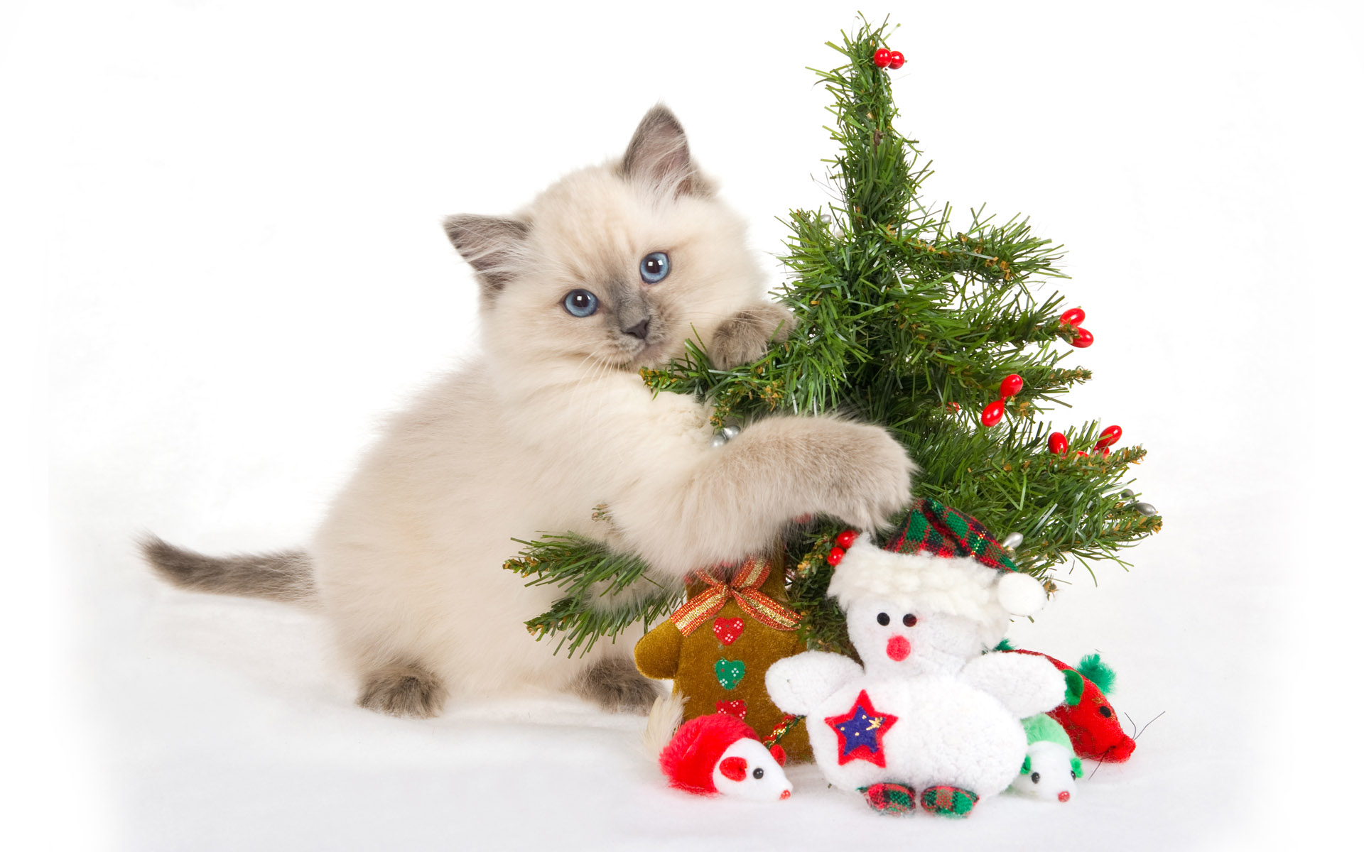 Christmas-Cat-Desktop-HD-Inn-wallpaper-wp5205219