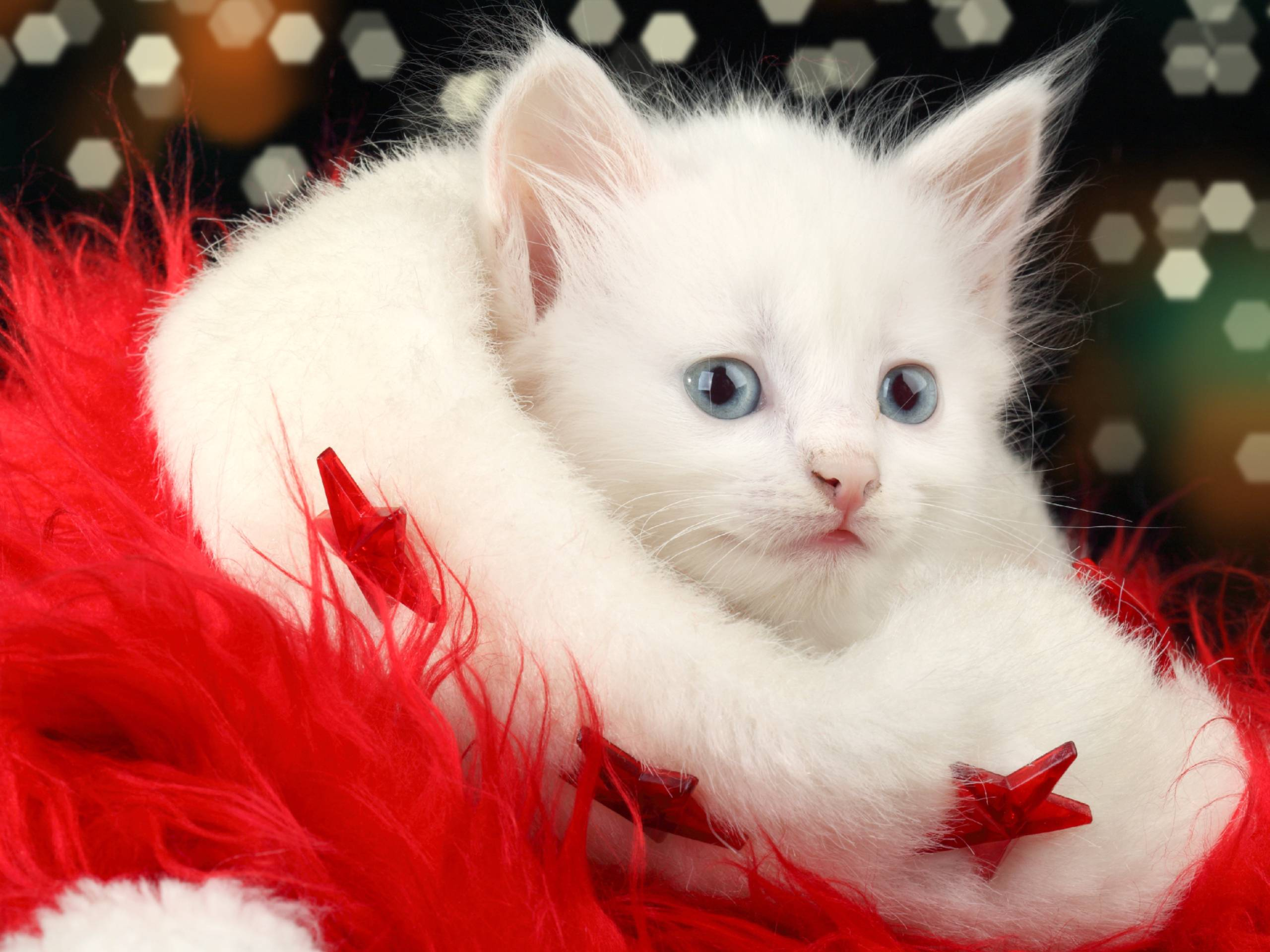 Christmas-Cat-HD-Inn-wallpaper-wp5205220