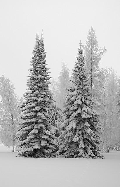Christmas-trees-wallpaper-wp4604768