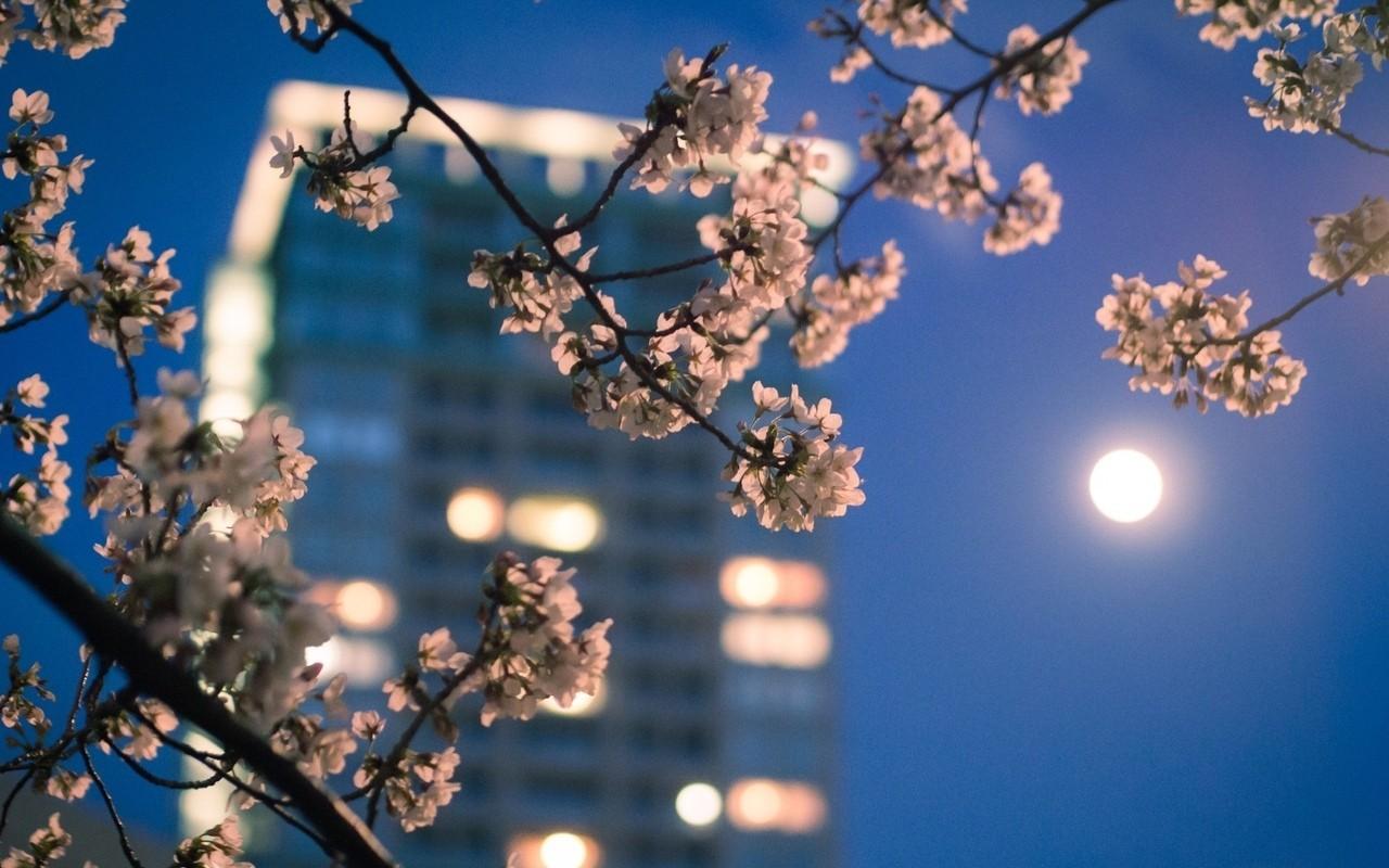 City-Moonlight-Nature-Night-Branch-Light-Lights-Moon-Flowers-Sunset-Sky-Girl-Sky-City-Mo-wallpaper-wp3403925
