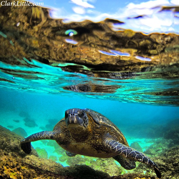 Clark-Little-Photography-Hawaii-Sea-Turtle-wallpaper-wp4805338