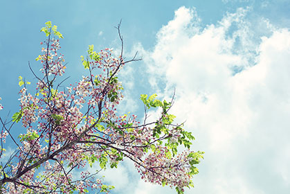 Cloudy-Bloom-wallpaper-wp5404161