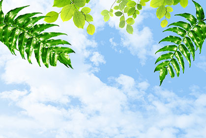Cloudy-Leaves-wallpaper-wp5404162
