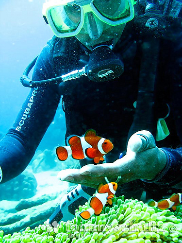 Clown-fish-and-scuba-diver-Please-like-comment-share-and-repin-Thank-you-http-lynn-wallpaper-wp5203211