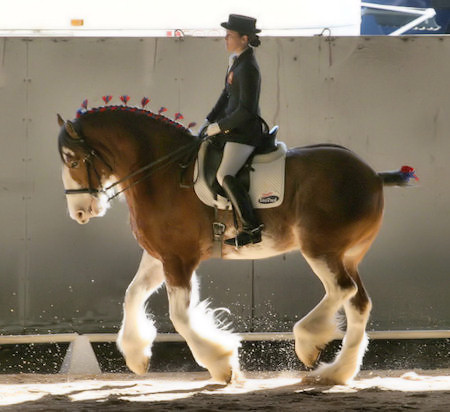 Clydesdales-do-Dressage-Too-wallpaper-wp5006152