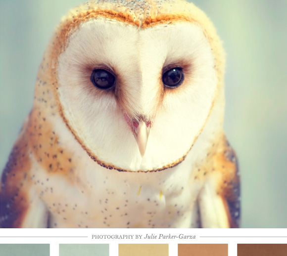 Color-Inspiration-Daily-Home-Creature-Comforts-daily-inspiration-style-diy-proj-wallpaper-wp4805418