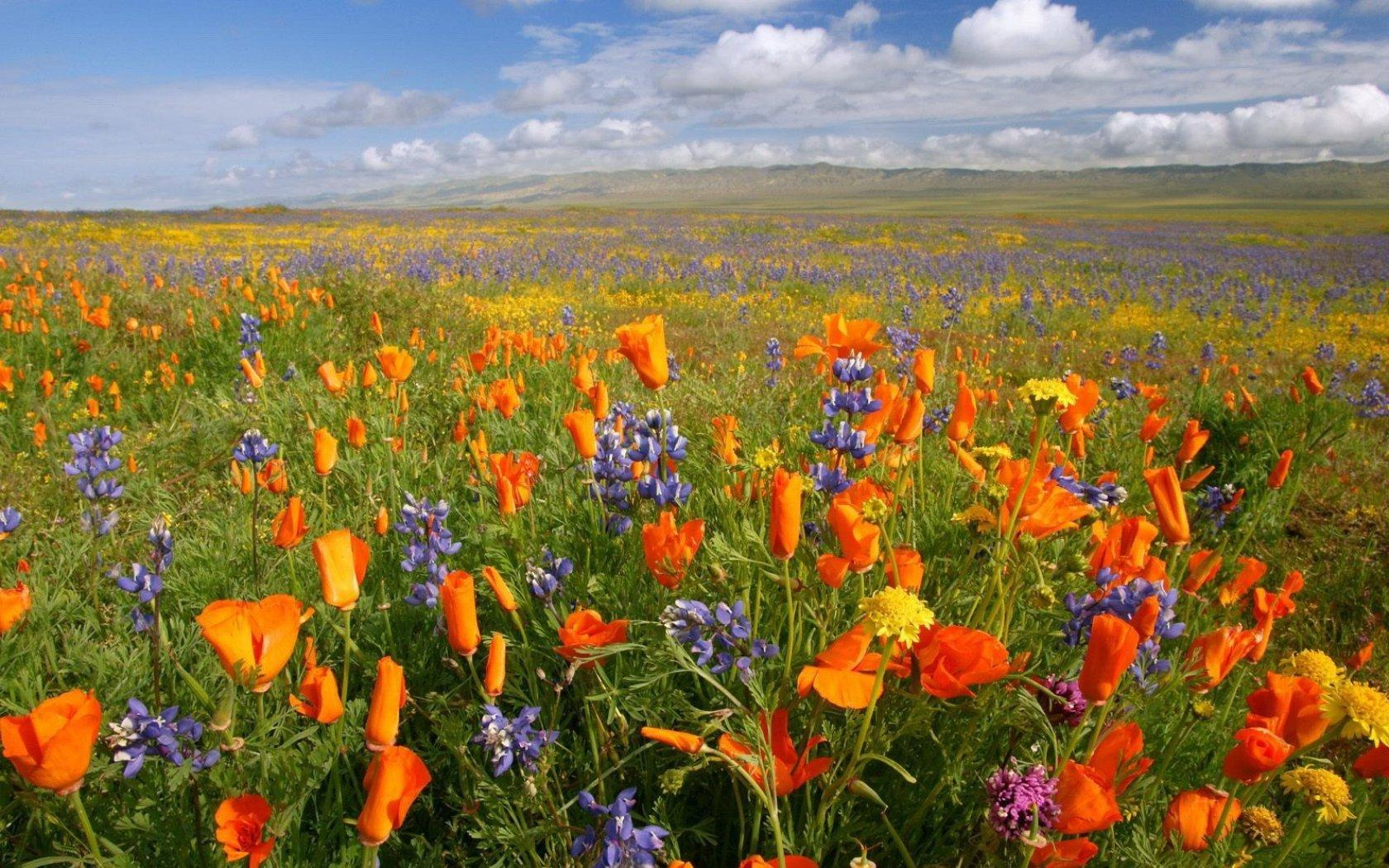 Colorful-Flower-Meadow-wallpaper-wp3004507