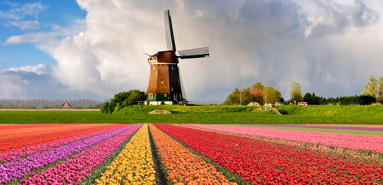 Colorful-Tulips-Field-wallpaper-wp3004514