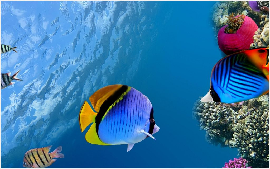 Coral-Reef-Fish-Underwater-Photography-coral-reef-fish-underwater-photography-desktop-c-wallpaper-wp3604359