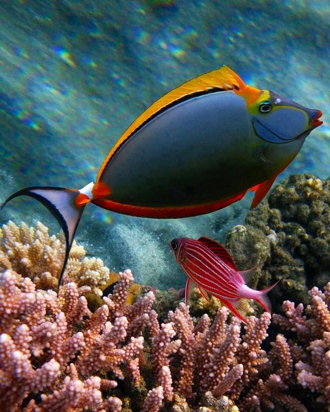 Coral-reef-fish-God-s-magnificent-creation-beauty-of-nature-wallpaper-wp4406035
