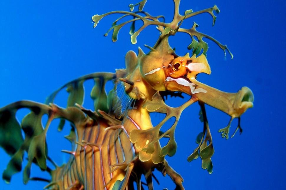 Coral-reefs-Seahorse-wallpaper-wp4004062