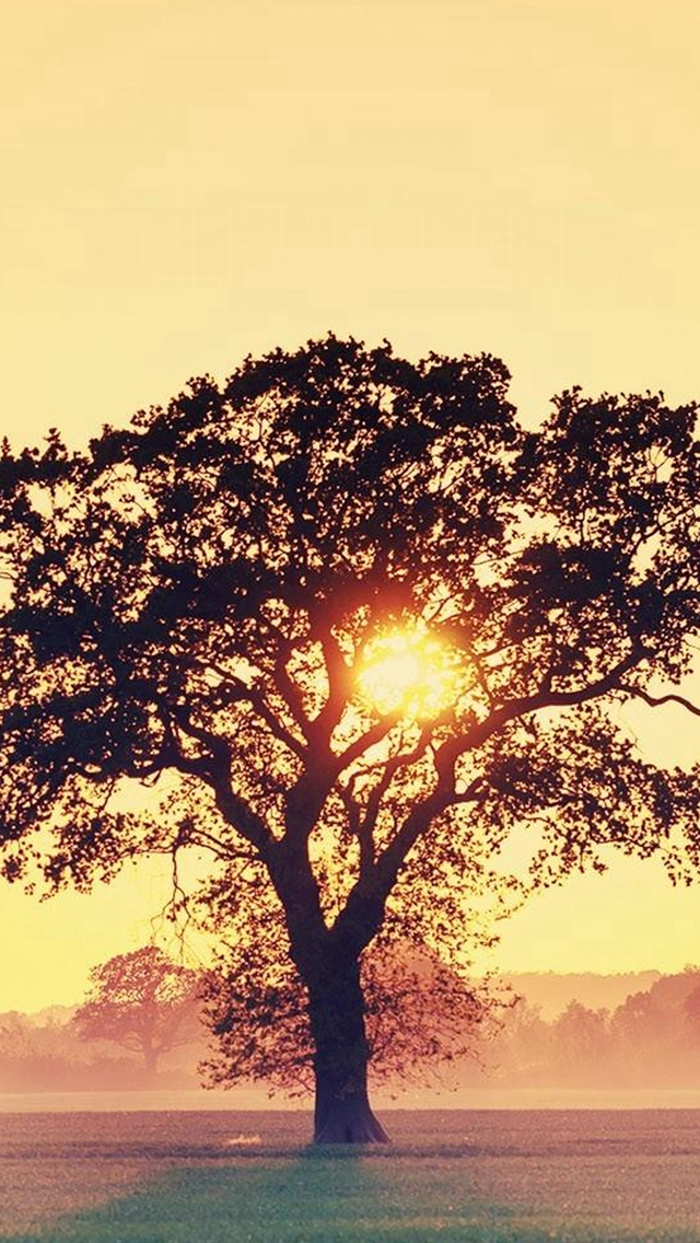 Countryside-Tree-Sunset-iPhone-s-wallpaper-wp424712