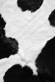 Cow-Texture-wallpaper-wp4605013