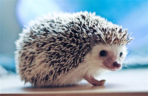 Cute-Hedgehog-wallpaper-wp3404326