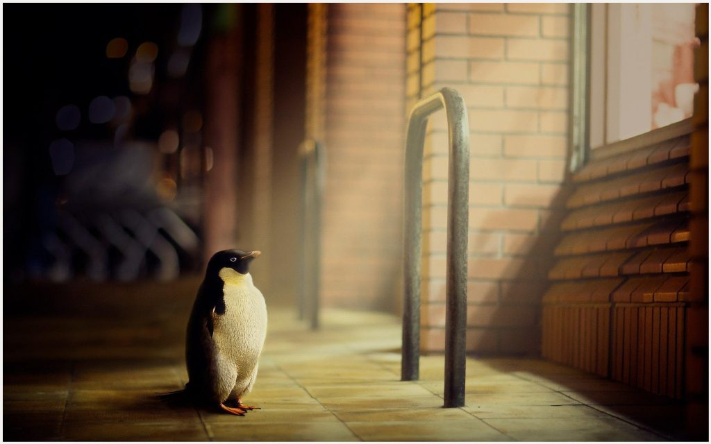 Cute-Little-Penguin-cute-little-penguin-1080p-cute-little-penguin-d-wallpaper-wp3404329
