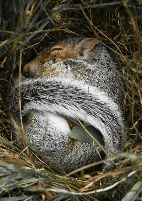 Cute-animal-picture-Cozy-squirl-Nature-photography-wallpaper-wp4406115