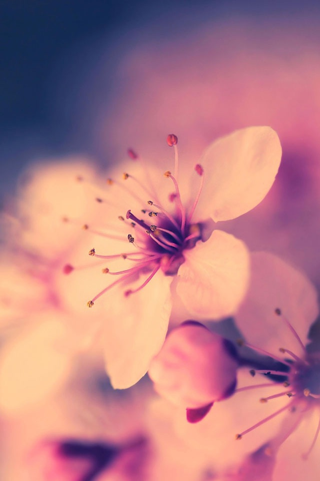 Cute-flower-wallpaper-wp4406138