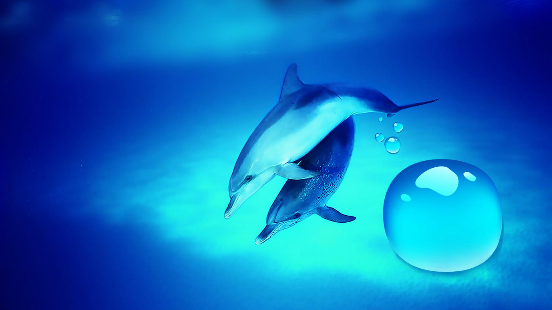 D-D-Dolphins-Desktop-HD-wallpaper-wp3604511