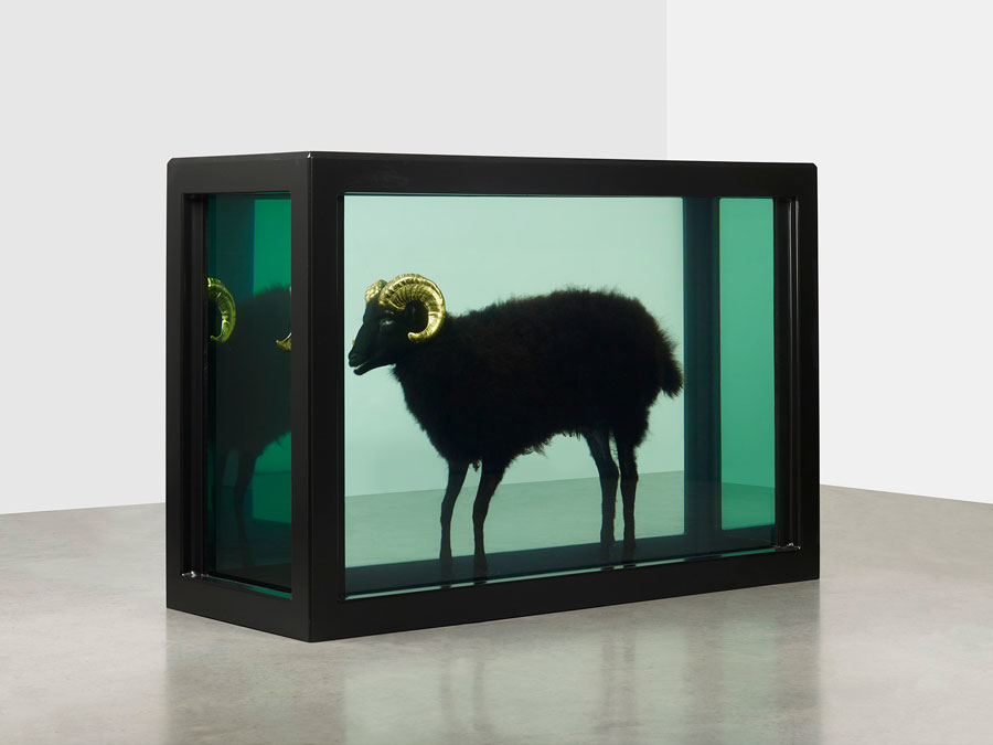 DAMIEN-HIRST-Black-Sheep-with-Golden-Horns-Glass-painted-stainless-steel-silicone-acryli-wallpaper-wp5602107