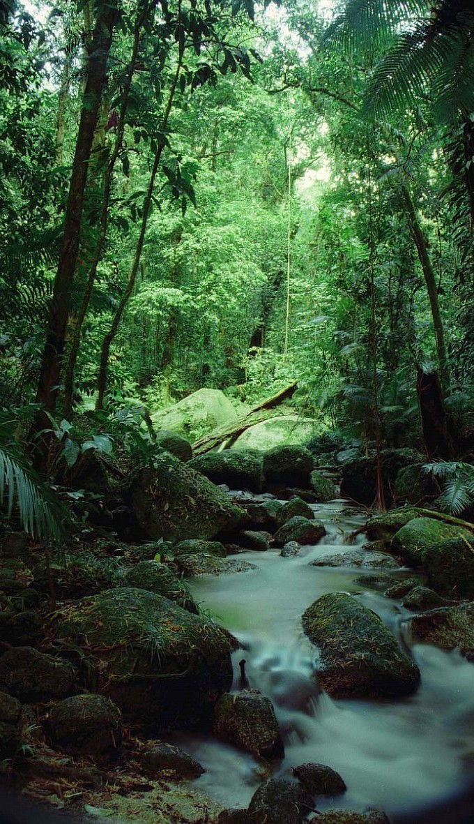 Daintree-Rainforest-is-one-of-Australia's-most-popular-destinations-Home-to-unfathomable-biodiver-wallpaper-wp3404406