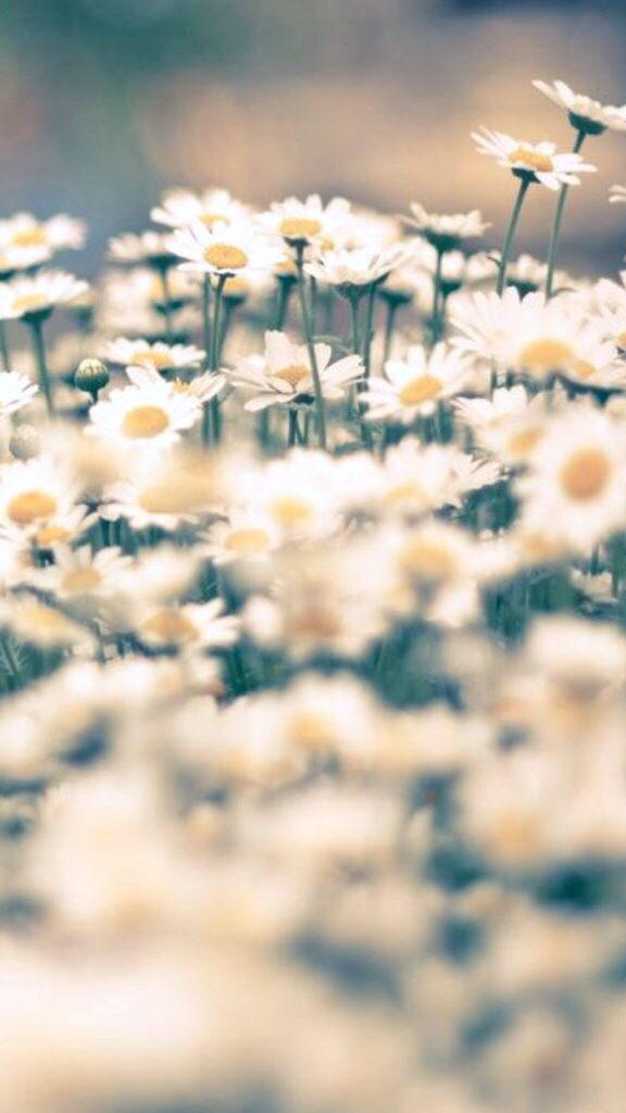Daisy-background-home-screen-wallpaper-wp4406225