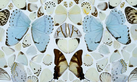 Damien-Hirst-Butterfly-wallpaper-wp5604213