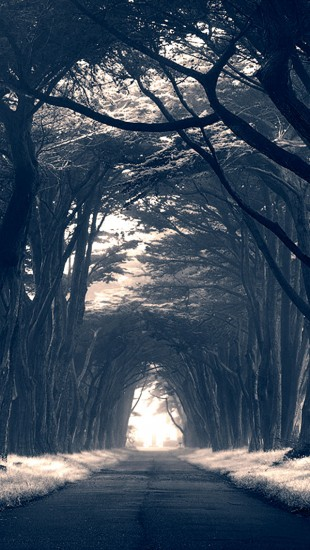 Dark-Trees-Avenue-The-iPhone-Wallpapers-wallpaper-wp4805772