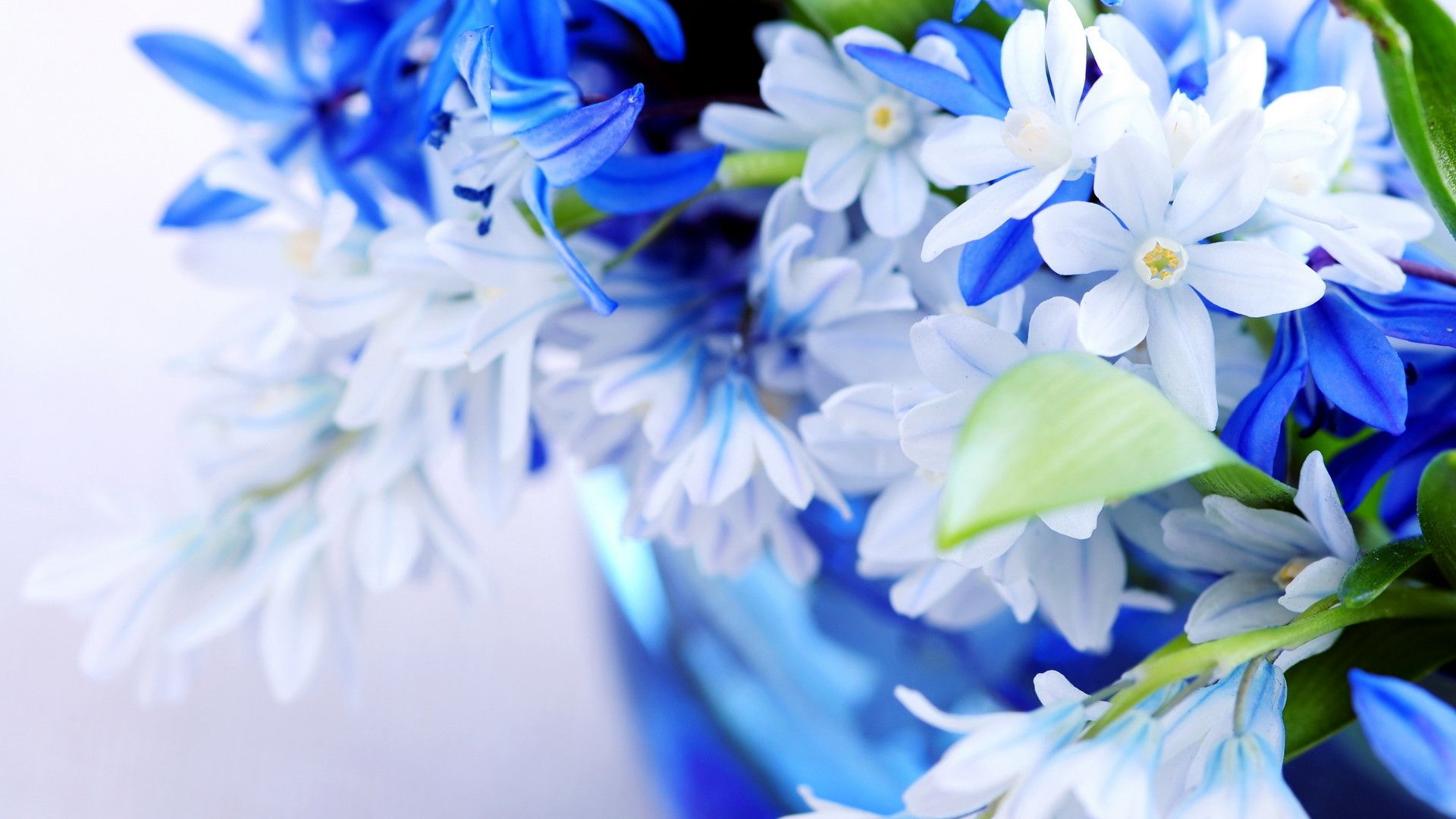 Desktop-HD-3d-Full-Screen-Flowers-wallpaper-wp3404614