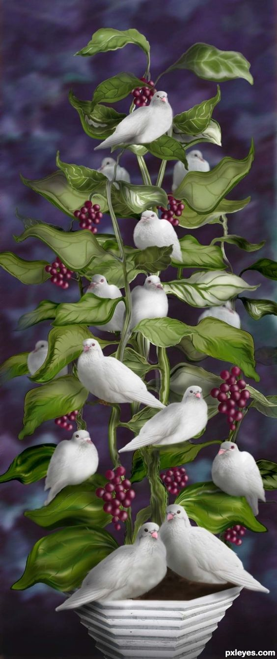 Dove-Tree-I-wish-you-Mom-and-Dad-such-peace-and-love-I-miss-you-xox-·°-·°-·Â-wallpaper-wp5805177