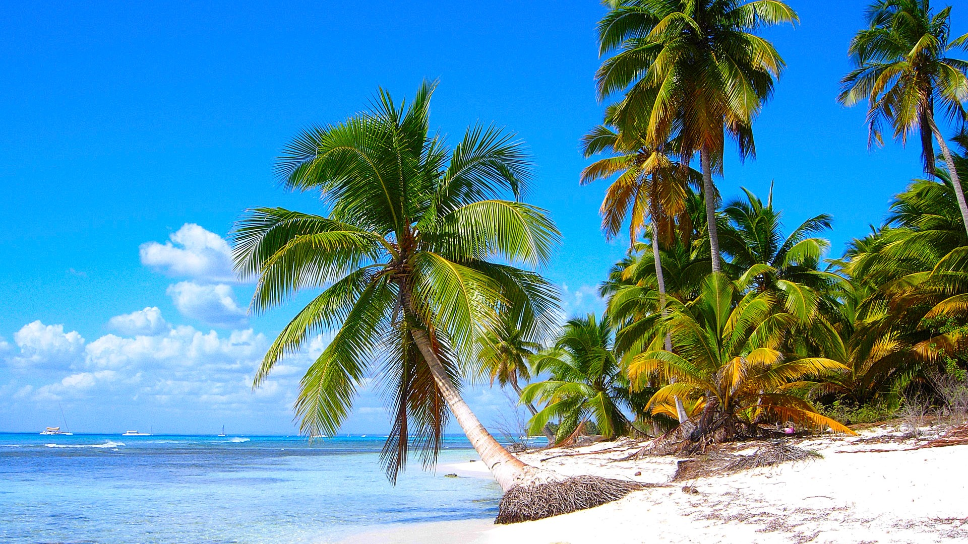 Download-sea-the-sky-clouds-tropics-palm-trees-island-section-Resolution-wallpaper-wp3404982