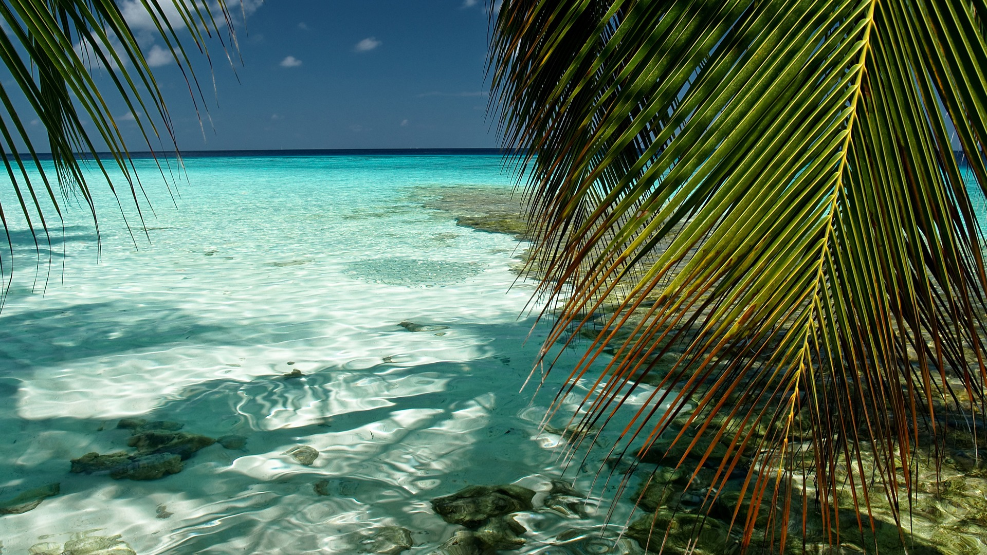 Download-sea-the-sky-water-transparency-nature-palm-trees-foliage-the-Maldives-the-wallpaper-wp3404983