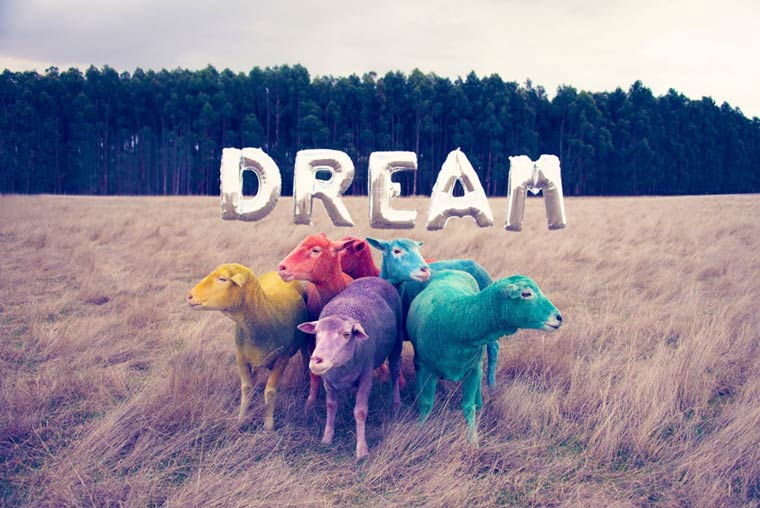 Dream-–-Les-moutons-colorés-de-Gray-Malin-wallpaper-wp3605225