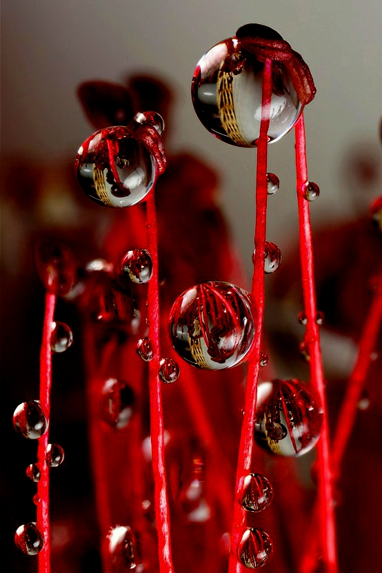 Droplets-perching-wallpaper-wp4806089