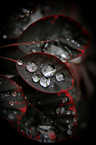 Drops-wallpaper-wp480300