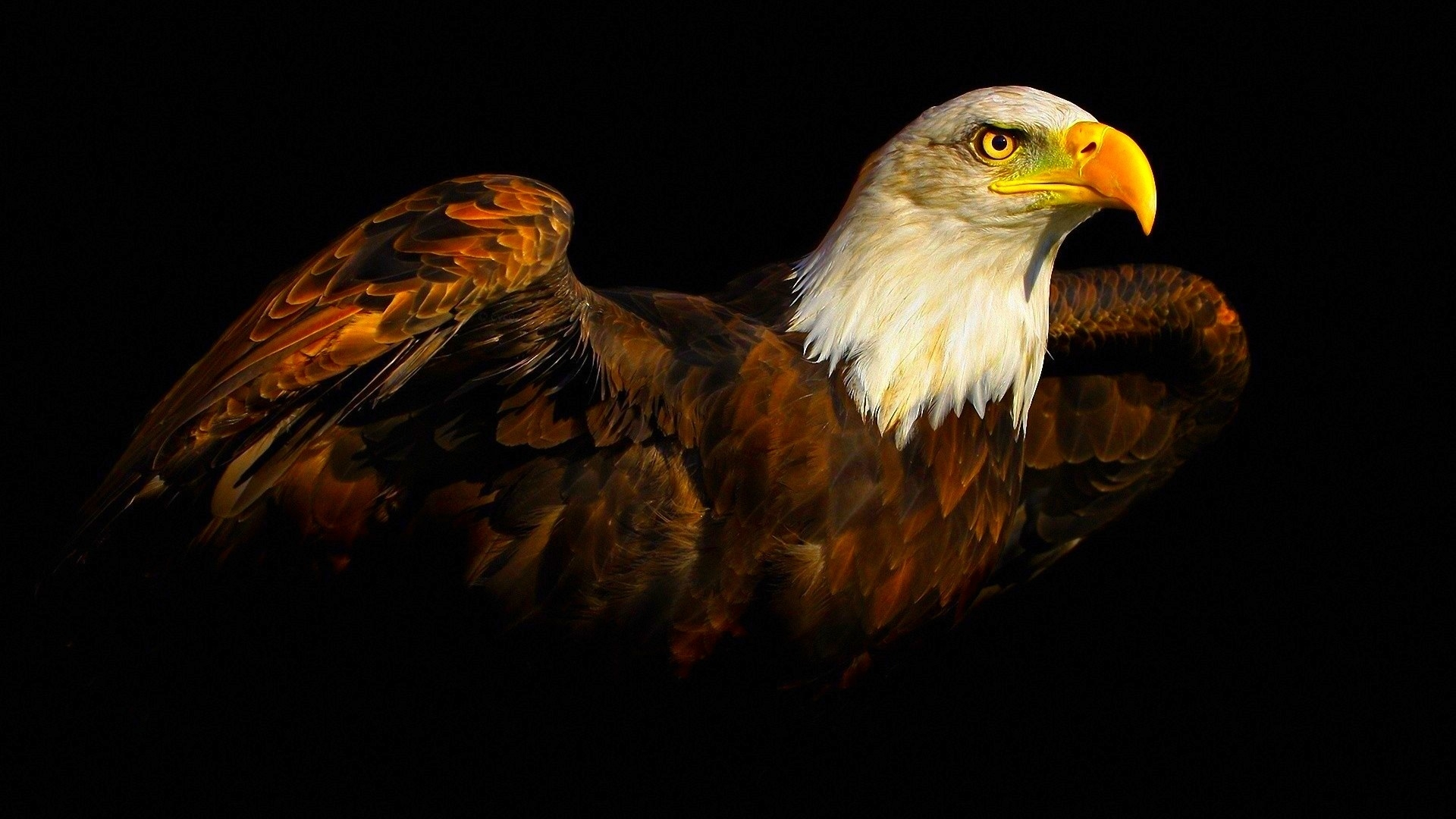 Eagle-Free-Download-wallpaper-wp3605288